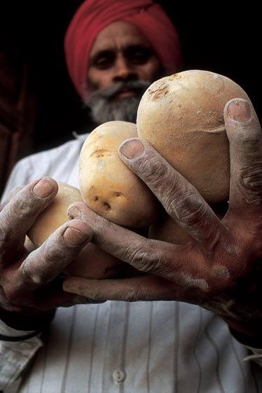 international year of potato