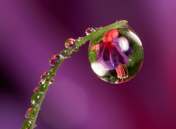 water droplet photography reflected - photo #18